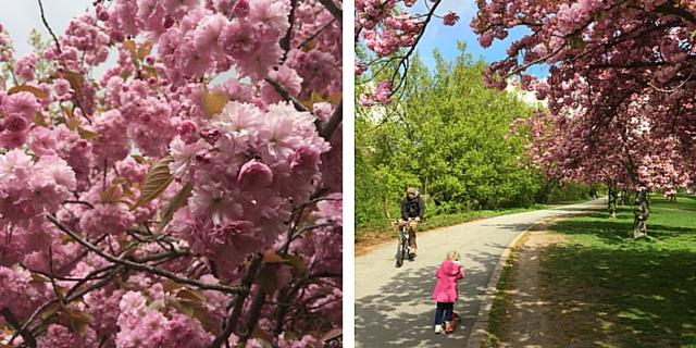 Апрель... с элементами счастья | Блог Анны Черных