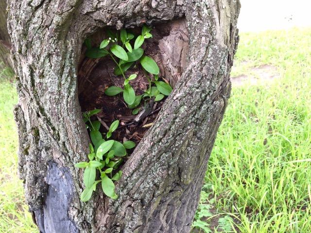 Пространство для неидеального | Блог Анны Черных